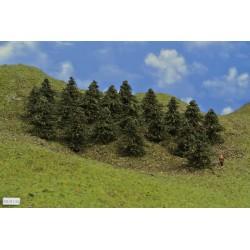 N - borovice,výška 5-6 cm,20ks (38/B1/N)