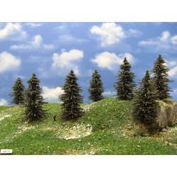 N - borovice,výška 10cm,20ks (39/B2/N)