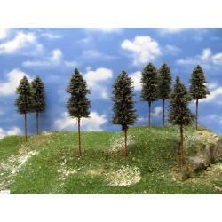 N - borovice,výška 15-17cm,20ks (42/B2//N